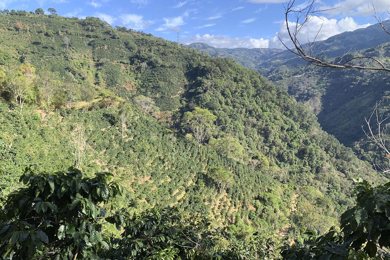 Hacienda La Minita