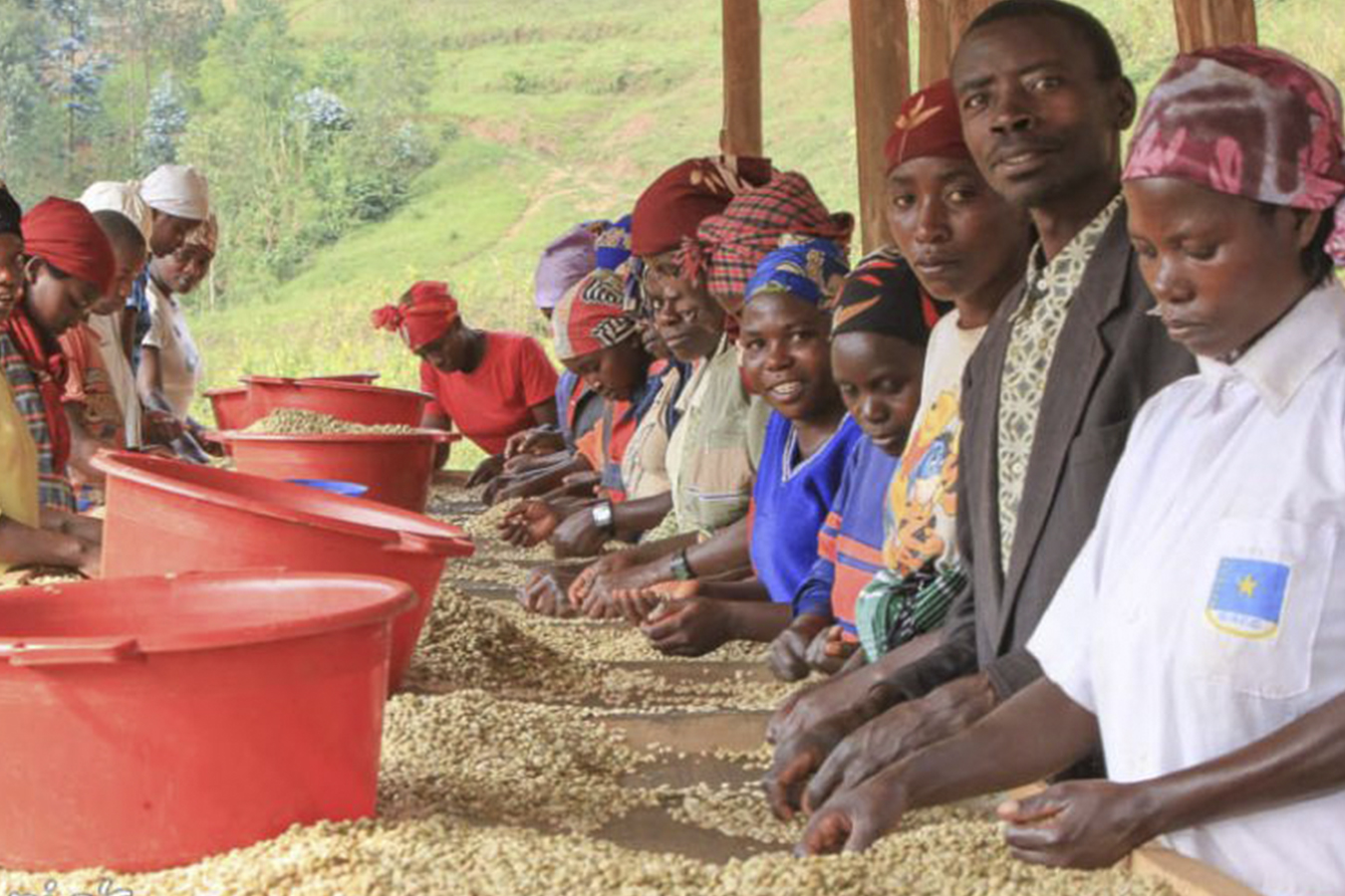 Sorting & Drying Mutovu's Coffee