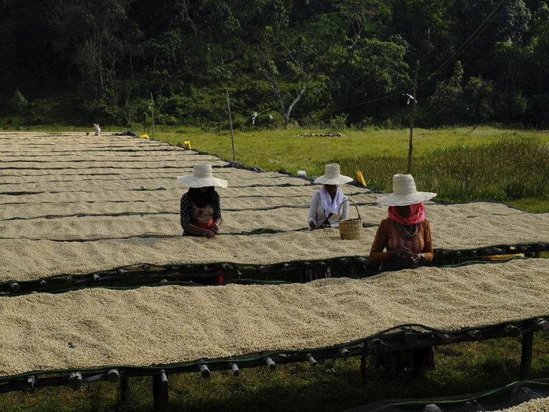 Kolla Bolcha Drying beds